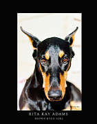 Doberman Art Posters - Brown Eyed Girl Poster by Rita Kay Adams