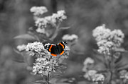 Decorate Art - Butterfly by Michal Bednarek