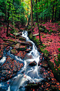 Autumn Foliage Posters - Chesterfield Gorge New Hampshire Poster by Edward Fielding