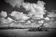 Deep Blue River Prints - Everglades Landscape Print by Rudy Umans
