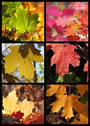 Impressionism Acrylic Prints Photos - Fall series 28 by France Laliberte
