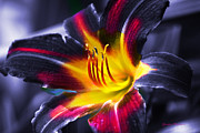 Flower Burst Print by Gunter Nezhoda