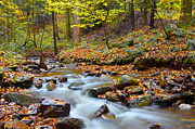 Stokes State Forest Posters - Forest Stream In Autumn Poster by Stephen  Vecchiotti