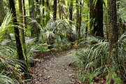 Jungle Prints - Forest trail Print by Les Cunliffe