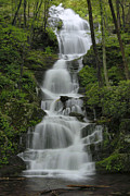 Forest Waterfall Print by Stephen  Vecchiotti