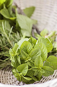 Mythja  Photography - Fresh herbs