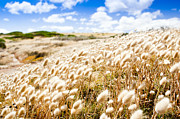 Fleurieu Peninsula Prints - Golden Field Print by Tim Hester