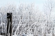 Rural Scenes Acrylic Prints - Hoar Frost on the Fence Acrylic Print by J McCombie