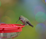 Kathy King - Hummingbird