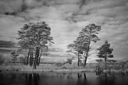 Alienating Art - Infrared picture of the nature area Dwingelderveld in Netherlands by Ronald Jansen
