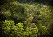 Tim Hester - Jungle Landscape