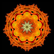 Flame Metal Prints - Kaleidoscope of Blown Glass Metal Print by Amy Cicconi
