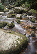 Landscape Of Becky Falls Waterfall In Dartmoor National Park Eng Print by Matthew Gibson