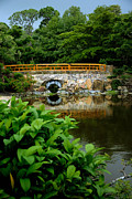 Japanese Garden Framed Prints - Morikami Japanese Garden and Museum Framed Print by Amy Cicconi