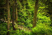Lush Green Posters - Path in temperate rainforest Poster by Elena Elisseeva