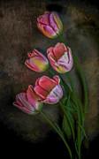 Hugo Bussen - 5 Pink Tulips