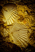 Brown Pyrography Metal Prints - Seashell in stone Metal Print by Raimond Klavins
