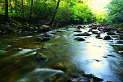 Trout Photo Posters - Tea Creek Monongahela National Forest Poster by Thomas R Fletcher
