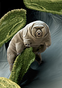 Color Enhanced Art - Water Bear by Eye of Science and Science Source