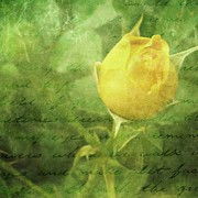 Yellow Flowers Posters - Yellow Rose Poster by Cathie Tyler