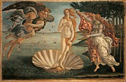 Sea Shell Fine Art Framed Prints - Italy, Tuscany, Florence, Uffizi Framed Print by Everett