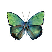 Winged Originals - 52 Arhopala Aurea Butterfly by Amy Kirkpatrick