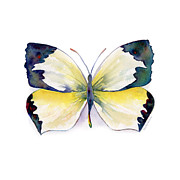 Mexican Painting Originals - 55 Mexican Yellow Butterfly by Amy Kirkpatrick