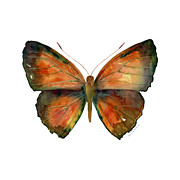 56 Copper Jewel Butterfly Print by Amy Kirkpatrick