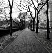 Photography Of Trees Framed Prints - 5th ave NYC Framed Print by Dillon Milardo