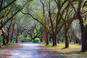 Tree Allee Framed Prints - Allee of Oaks Framed Print by Dale Powell