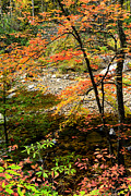 Rushing Prints - Autumn Cranberry River Print by Thomas R Fletcher