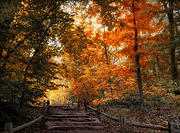 Stairs Prints - Autumn Trail Print by Jessica Jenney