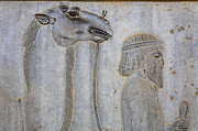 Dromedary Photos - Bas Relief at Persepolis in Iran by Robert Preston