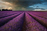 Beautiful Lavender Field Landscape With Dramatic Sky Print by Matthew Gibson