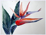 Mindy Newman - Bird of Paradise