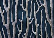 Coral Design Print by Jean Noren