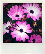 Closeup Photo Posters - Flowers Poster by Les Cunliffe