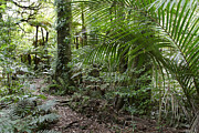 Jungle Photos - Forest by Les Cunliffe