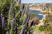 California Prints - La Jolla Series Print by Josh Whalen