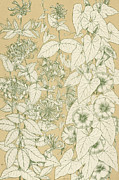 Garden Drawings - Leaves from Nature by English School