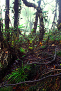 Tree Ferns Digital Art - Misty Rainforest El Yunque by Thomas R Fletcher