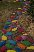 Stepping Stones Posters - Multicolored rock path Poster by Jim Corwin