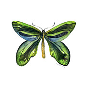 Blue And Green Paintings - #6 Queen Alexandra Butterfly by Amy Kirkpatrick
