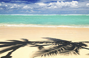 Silhouettes Metal Prints - Tropical beach Metal Print by Elena Elisseeva