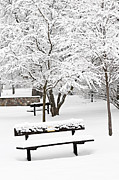 Park Scene Framed Prints - Winter park Framed Print by Elena Elisseeva