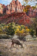 Slickrock Framed Prints - Zion National Park Framed Print by Utah Images