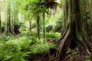 Tropical Forest Prints - Jungle Print by Les Cunliffe
