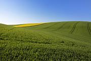 Agricultural Landscape. Auvergne. France. Print by Bernard Jaubert