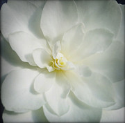 Flower Photography Prints - Flower Print by Les Cunliffe