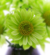Green Photos - Flowers by Kristin Kreet